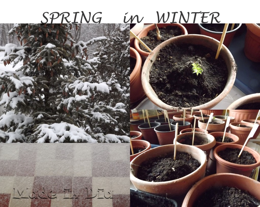SPRING in WINTER